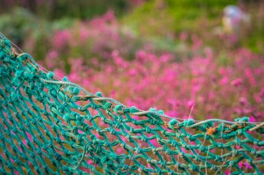 Green net fence surrounding rural garden with Cornish flowers called Pink sea thrift growing meadow, Cornwall, UK