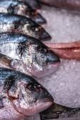 Zúzott jég hideg kijelző a fedett halpiac friss tenger gyümölcseit