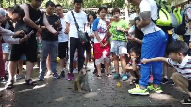 Zhangjiajie, China -  August 2019 : Crowd of chinese tourists throwing pieces of fruit food to small wild monkey,  Ten Mile Gallery Monkey Forest, Zhangjiajie National Park