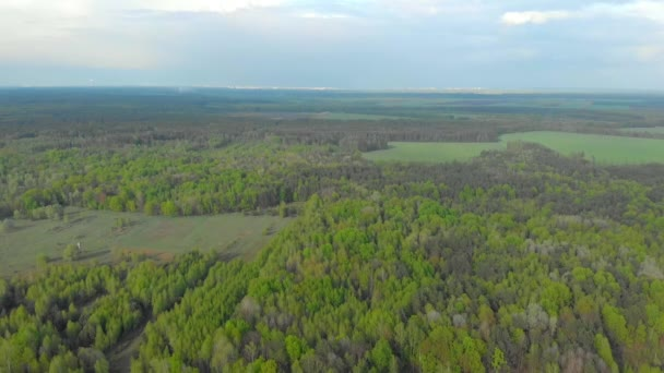 forests and fields of Belarus aerial photography