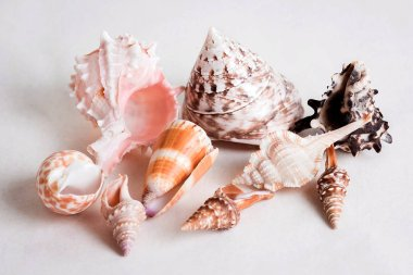 seashell is a gift from the sea