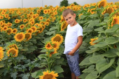 """Картина, постер, плакат, фотообои """"красивый мальчик в поле с подсолнухами . цветы пионы черно города"""", артикул 389613306"""