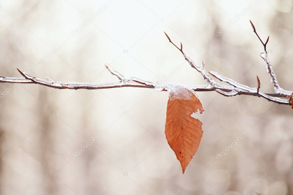 A lone yellow leaf frozen on the branch.
