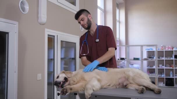 Vet stroking sick lying dog at animal care clinic