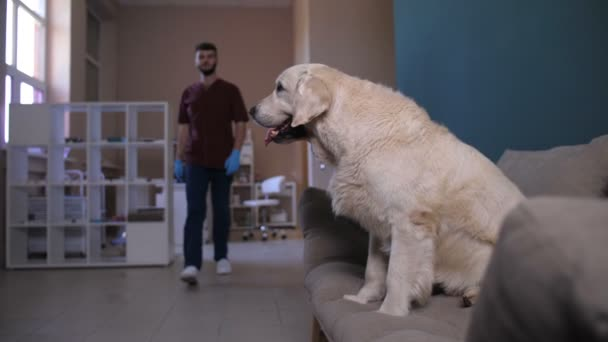 Dog on sofa giving paw to vet doctor in clinic
