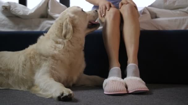 Clever dog keeping watch over pet owners slippers