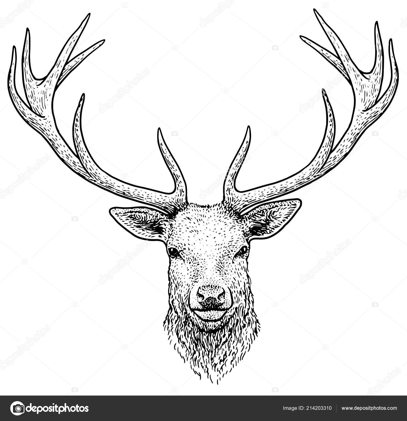 Deer head illustration drawing engraving ink line art vector stock vector