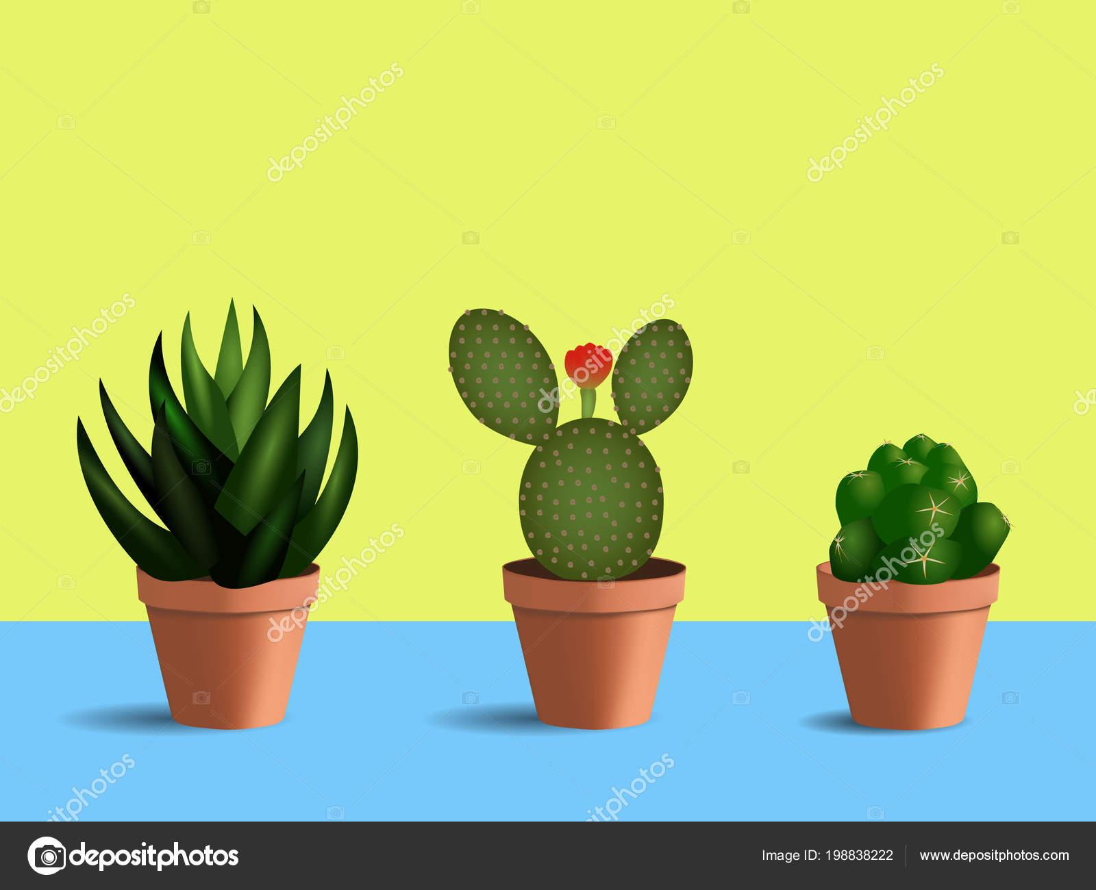 Juego Plantas Suculentas Macetas Redondas Plantas Interior Con Flor - Plantas-interior-con-flor