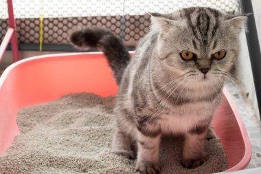 Cat in the sandbox
