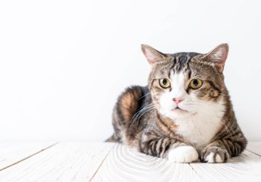 cute and grey cat on wood background with copy space