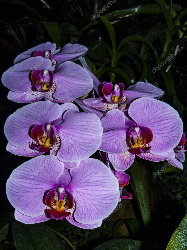 foto de Fleurs Violettes Une Branche Floraison Des Orchidées Image Pour ...