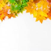 Podzimní pozadí s červenými, žlutými, oranžovými listy javoru