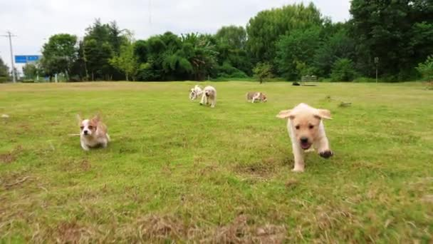 Group of lovely puppy dogs running outdoor,4k