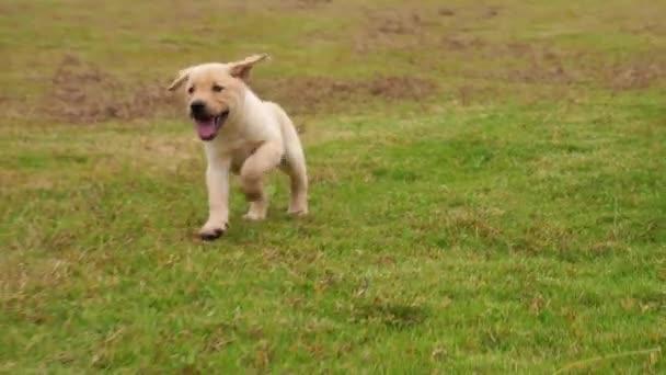 Gruppe schöner Hundewelpen, die im Freien laufen, 4k