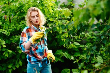woman with secateurs cutting branch of tree in garden