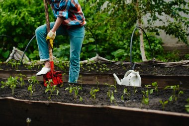 woman with shovel digging flowerbed with seedlings in  garden
