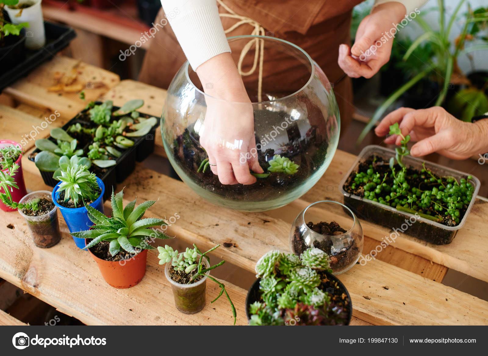 Florist Preparing Soil Plants Glass Pot Concept Mini Terrarium