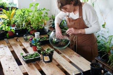 Woman nerd florist making mini terrarium with house plants, female hobby concept