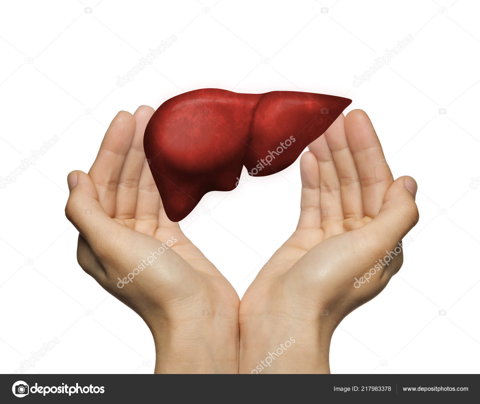 Human Liver Two Palms Woman White Isolated Background Concept