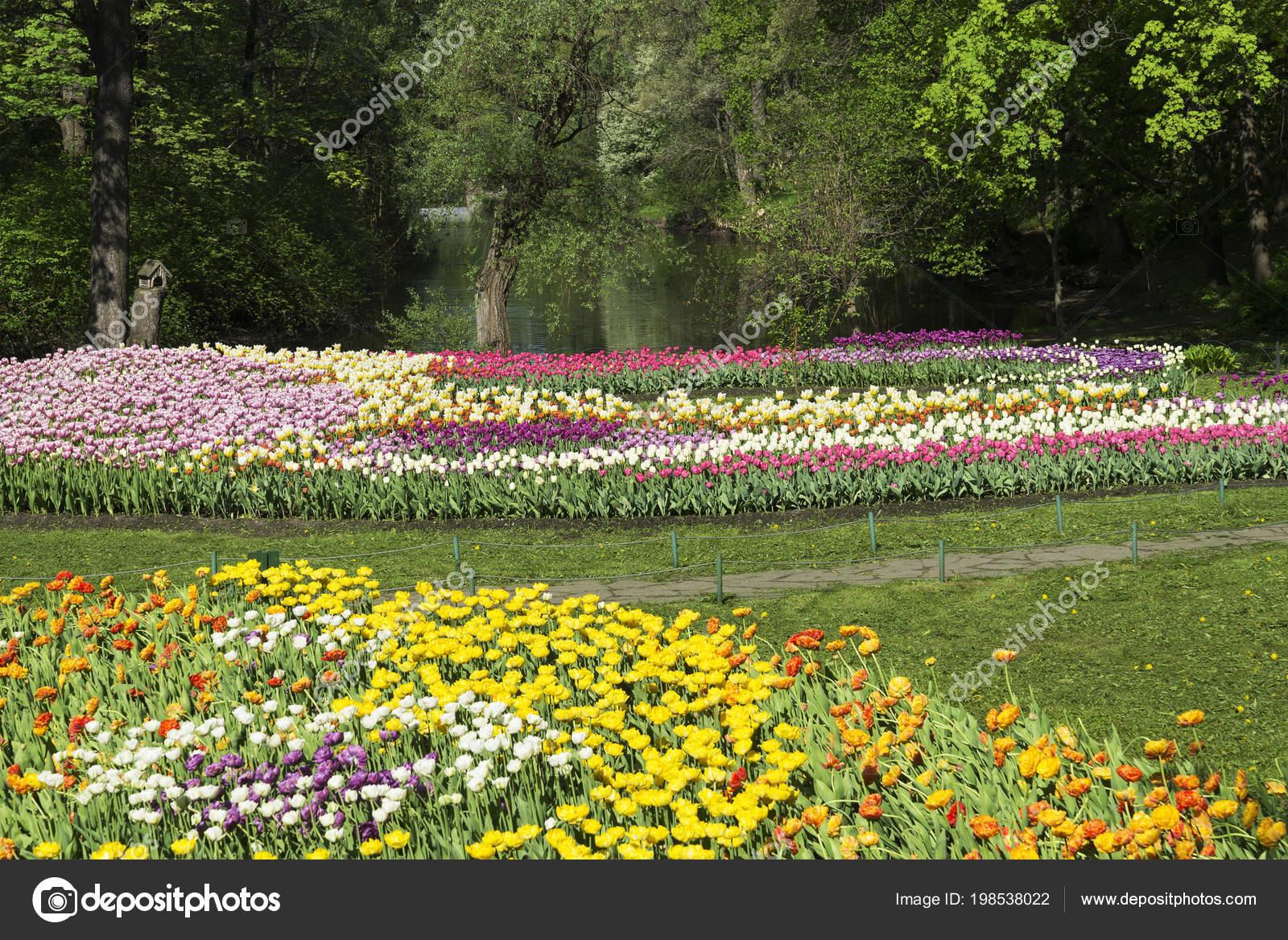 Bon Vue Panoramique Plate Bande Fleurie Avec Tulipes Jardin Printanier U2014 Photo