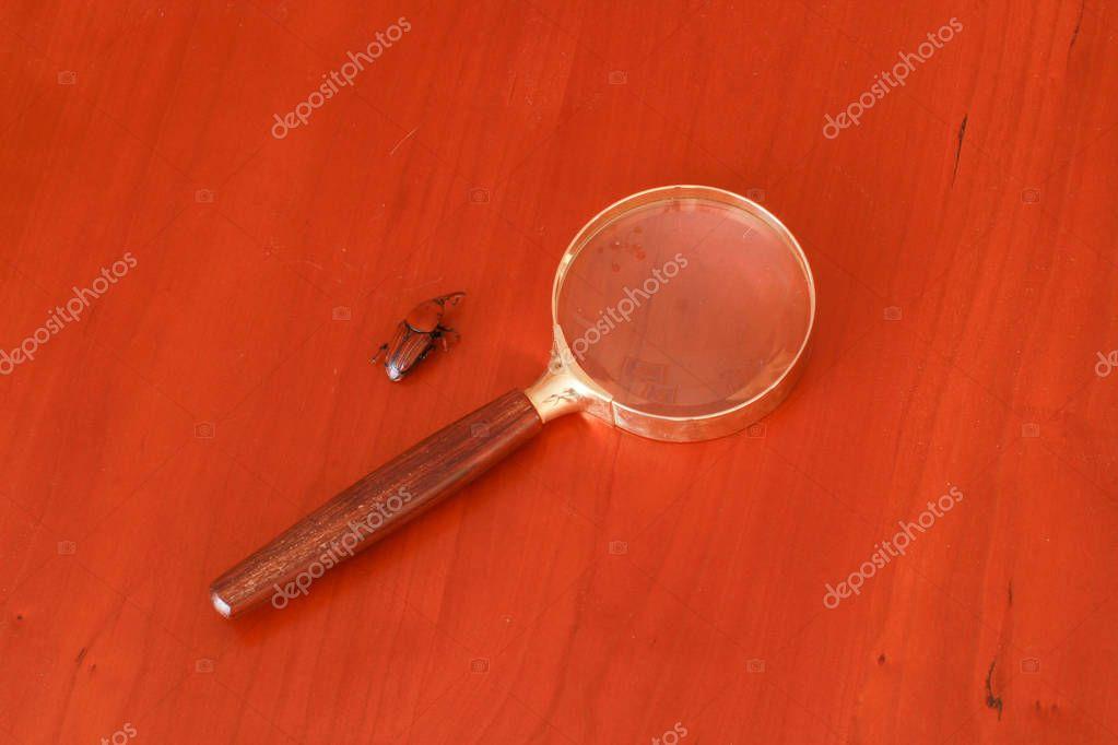 Loupe pose sur une table avec un scarabe marron mort