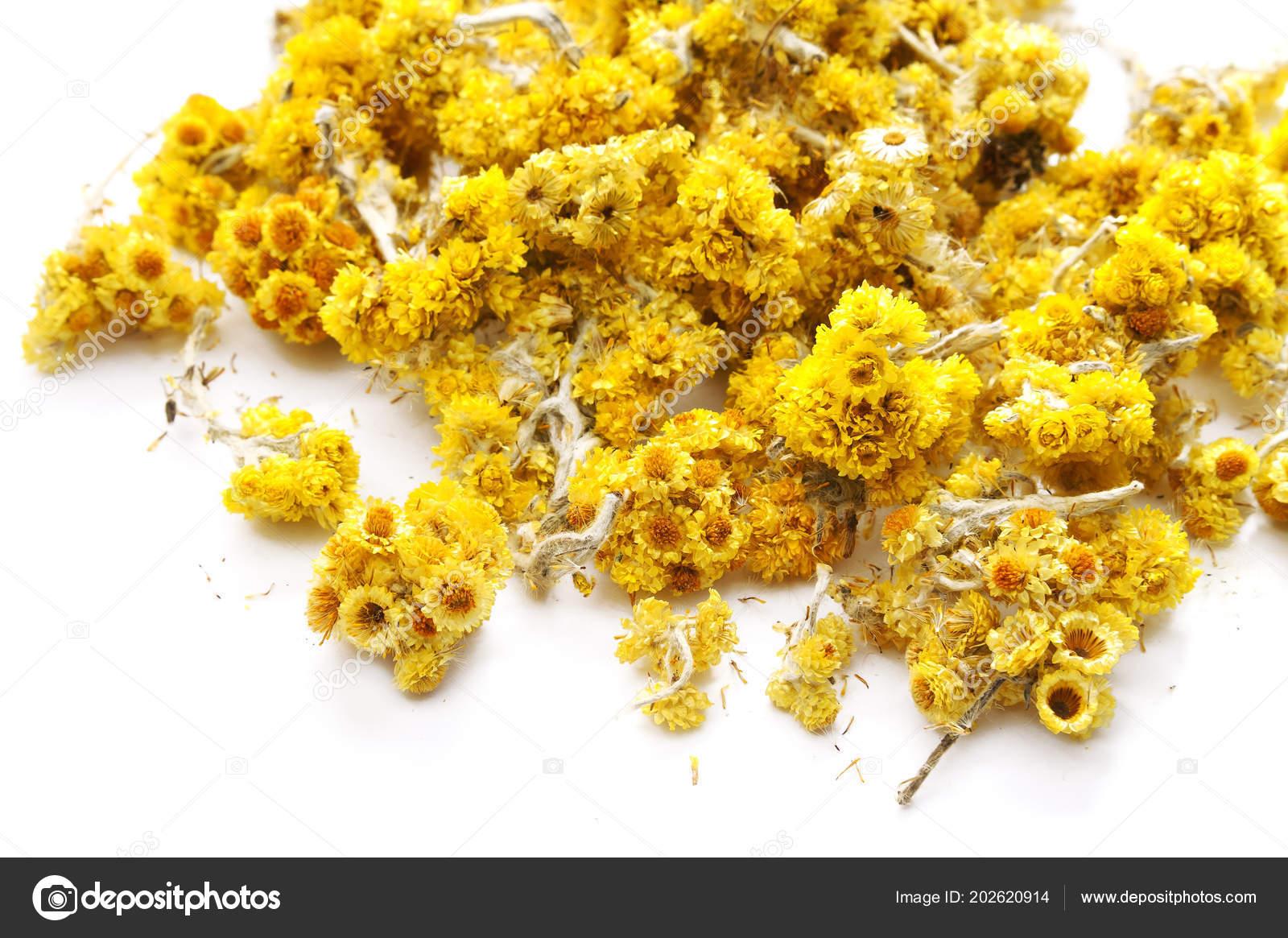 Immortelle Dried Flowers Flowers Healthy