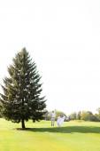 Mladý pár chůze v blízkosti zelený velký smrk na trávě v bílém nebi pozadí.