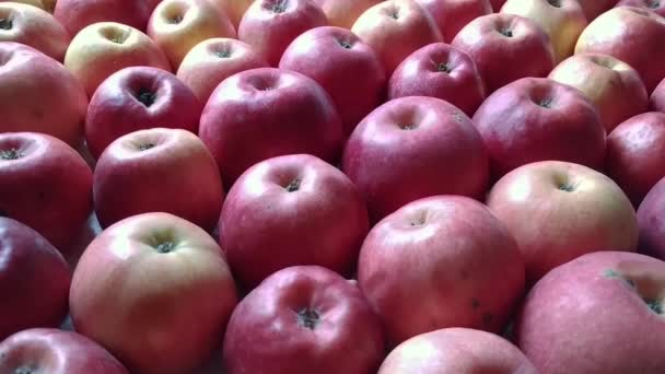 Female hands takes one apple from a bunch