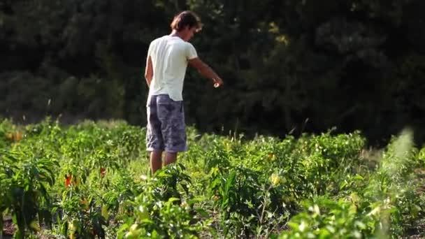Yong farmer walking on the field of organic farm