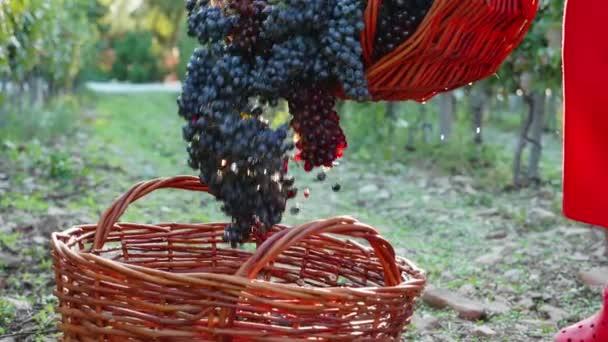 Trauben ergießen sich in Zeitlupe in Weidenkorb