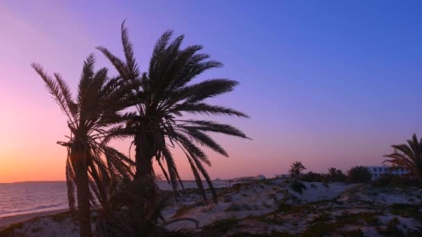 Tranquil sea and coastline with palm trees at sunset on beach