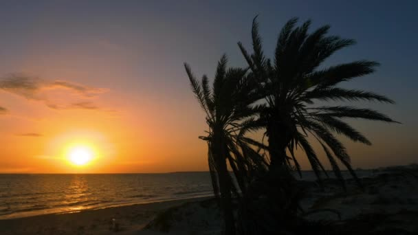 Tranquil landscape with palm trees and beautiful sunset or sunrise over the sea