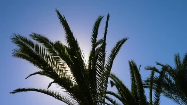 Silueta tropických palem listy s odlesk slunce na bezmračné obloze jako pozadí. Africké botaniky textura