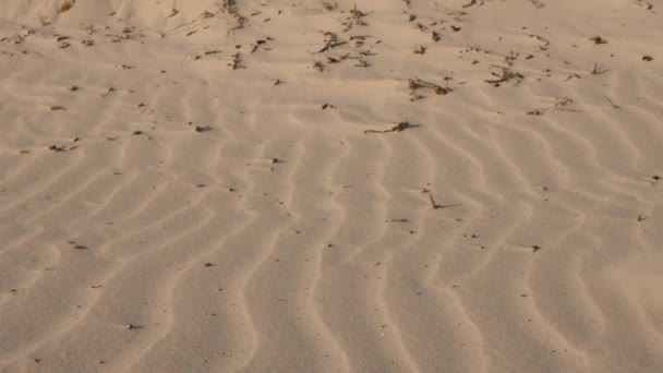 Close-up of male feet sink in the sand. Walk barefoot in the desert. The man is walking past the camera, the feet sink in the sand. Hot sand. Walk in the desert
