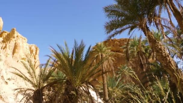 Malebná krajina s palmovými stromy a skály s modrou oblohou