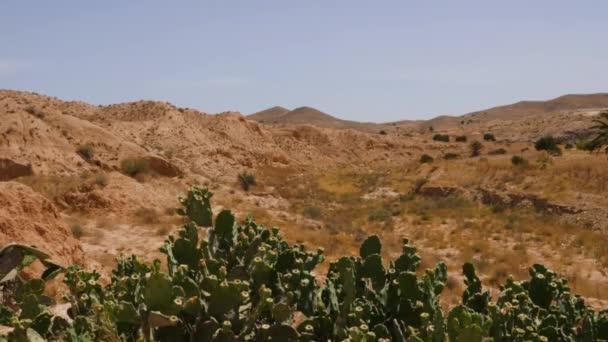Kaktusy v poušti Sahara s béžové hory a modrá obloha