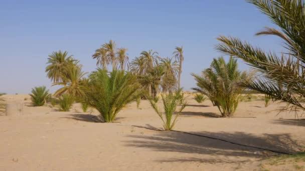 Africké scény s zelené palmy a keře na písečné duně v poušti