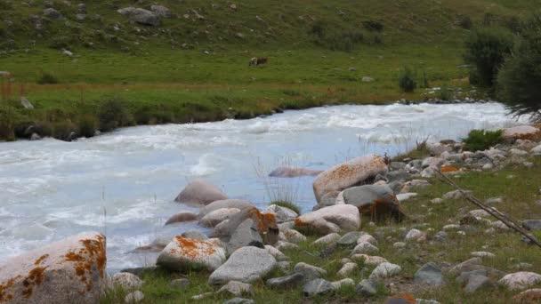 Krávy pasoucí se na zelené louce v horském údolí a tekoucí říční krajiny