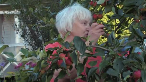 Starší starší ženy v zahradě apple mezi ovocné stromy v krajině dvorku. Zahradníka žena jíst zralé jablíčko v ovocné zahradě