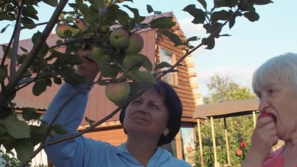 Two senior women trying apples in orchard near big house