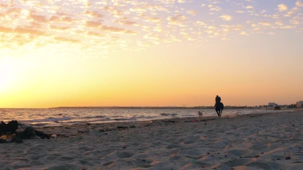 Man rider riding on horse and dog running on sandy beach while morning sunrise