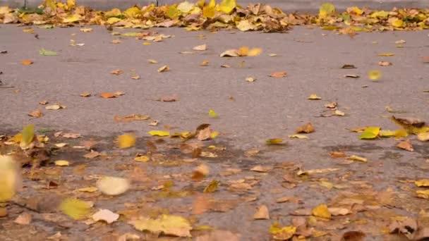 Vítr vát padající listy na asfaltovou silnici v podzimní city. Seosonal listy opadávají