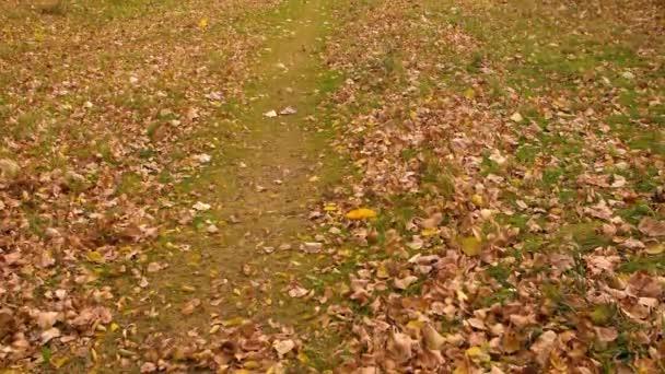 Žluté a oranžové listy foukání okno na zeleném trávníku v podzimním parku