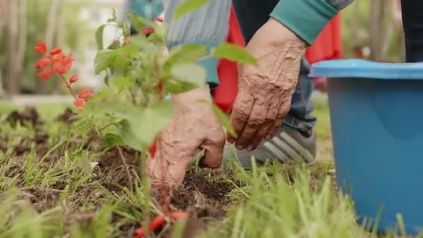 People Hands Plant Flowers Garden Greenery Outdoor