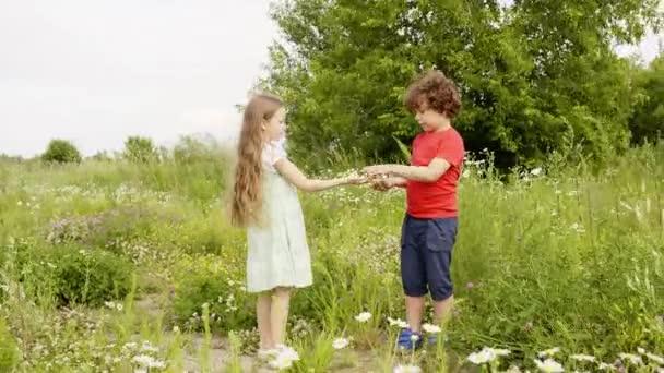 Období dospívání letní větrná louka květinová okvětní