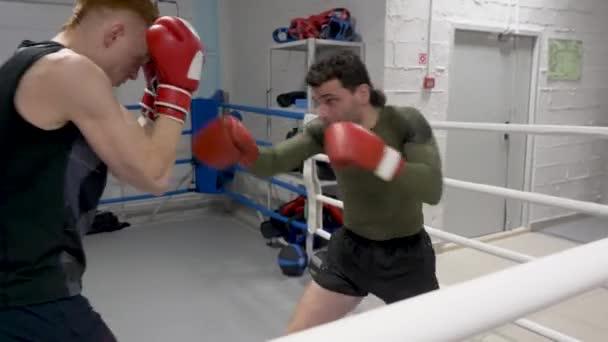 Dva boxery na prstenci