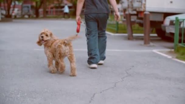 Pohled zezadu na chlapce kráčejícího se psem na ulici, dolní část