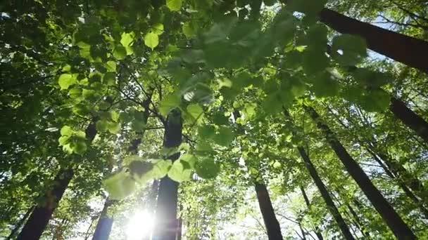 tetején a nyári nyírfa, a nap süt