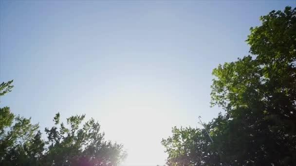 Top letní stromů s sluníčko
