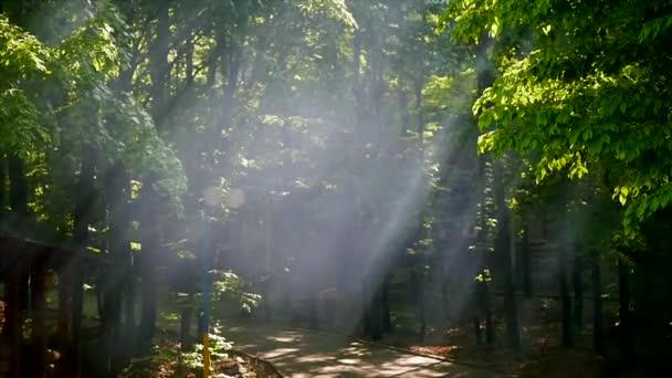 Napfény segítségével levelek. nap sugarai az erdő